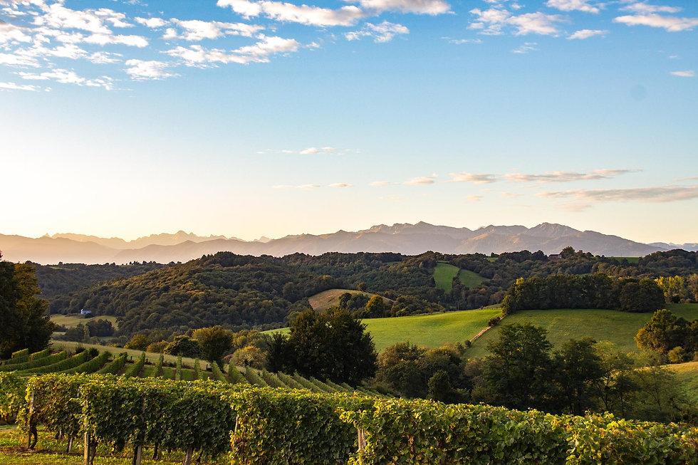 Le vignoble du Jurançon.jpg