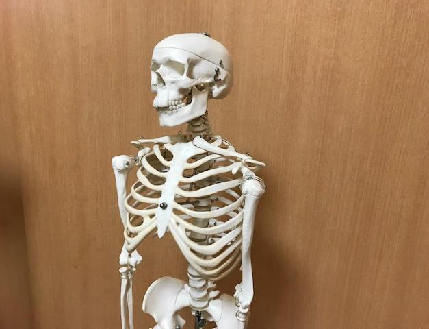 骨模型(こつもけい)