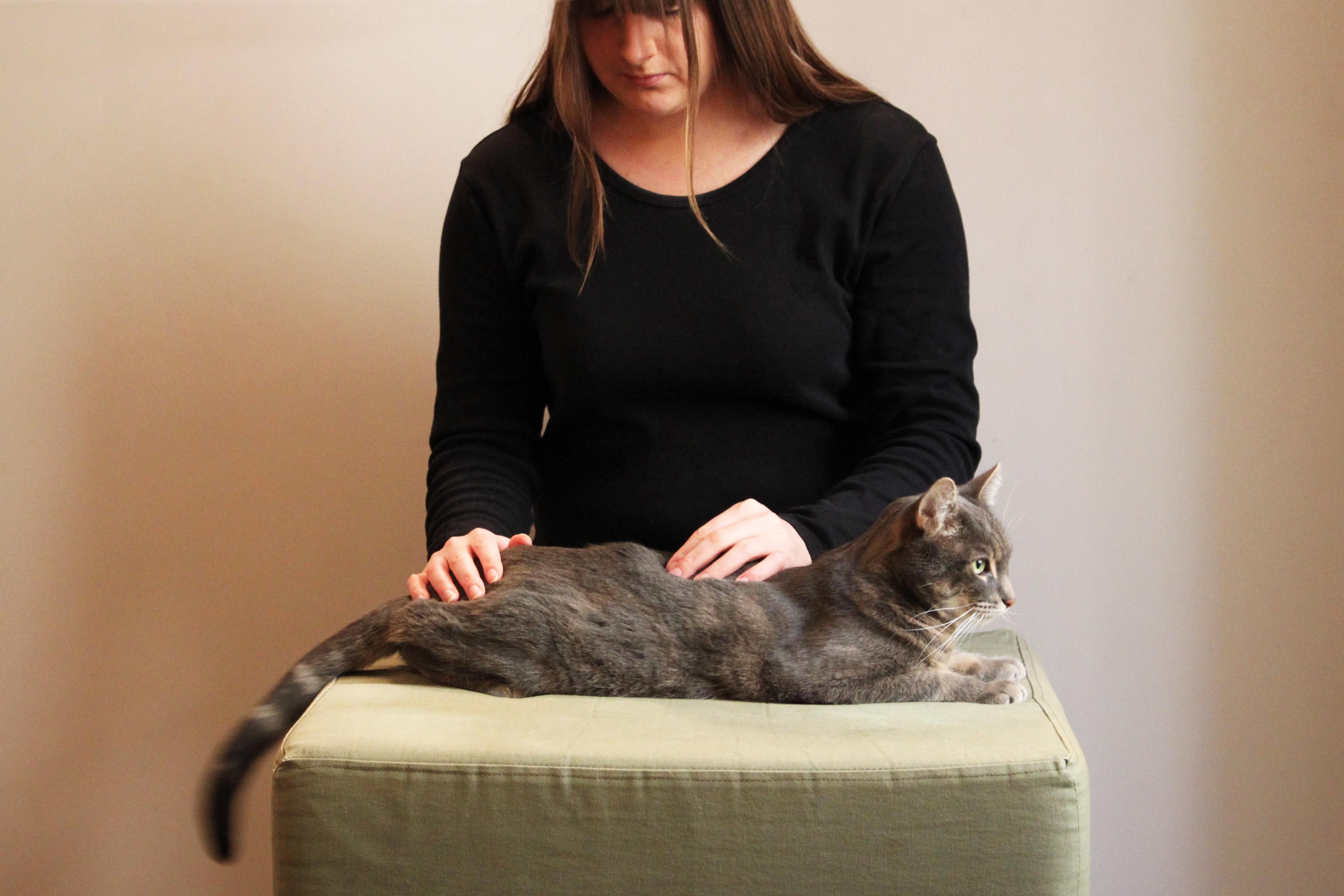 Ostéopathie féline