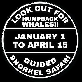 snorkel_whales.png