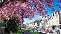 Galashiels-Bank-Street-Gardens-BlossomTr