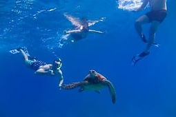 the-animals-turtle-snorkelling-300x200.jpg