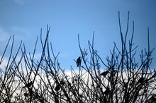 For the Birds photo.jpg