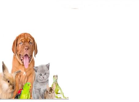 Die Kräfte unserer Haustiere