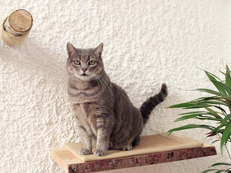 DIY: So baust du eine Kletterwand für deine Katze