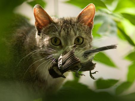 Katze frisst Vögel: Was tun, damit die Katze nicht zum Killer wird