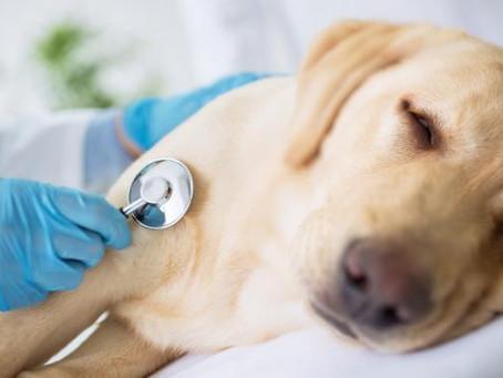 Tierisch überflüssig: Krankenversicherungen für Haustiere
