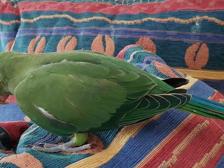 Ist mein Papagei krank? Wie du die 10 Symptome erkennst.