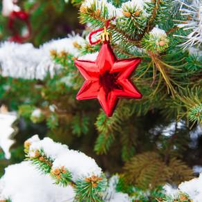 Как выбрать идеальную елку, или Нарядим новогоднее дерево в саду