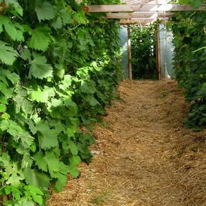 Польза и вред опилок для огорода