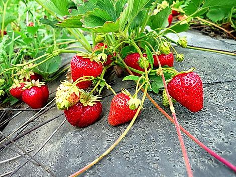 Метод выращивания под укрытием