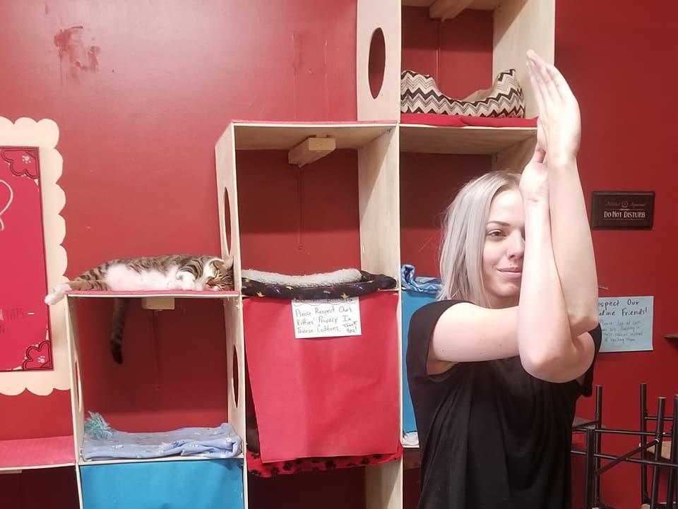 Cat Cafe, Madison - Oct 2017