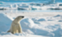 Norwa Polar Bear Icebergs