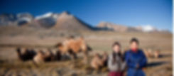 Mongolia, Bactrian-Camels-And-Local-People