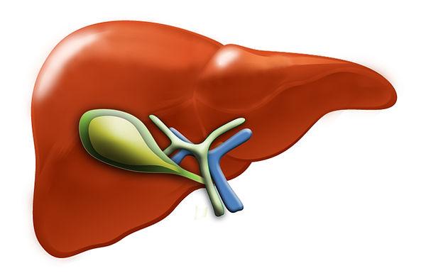 Liver galbladder.jpg