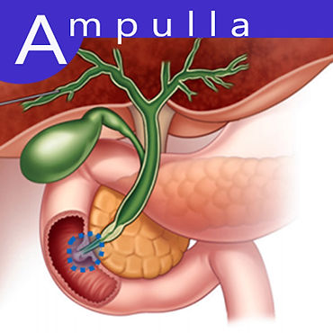 Ampulla.jpg