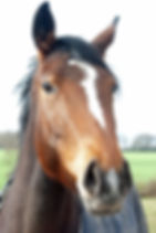 horse 06032011 1.jpg