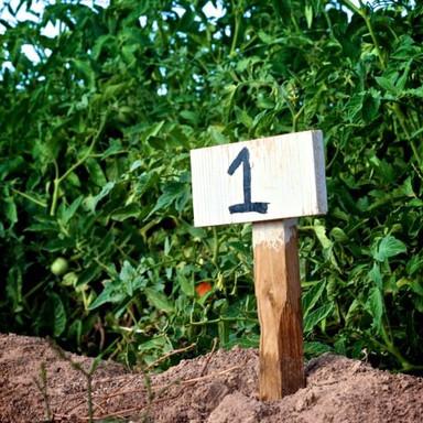 Maricopa Community Garden Plot 1
