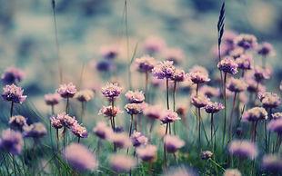 nature_flowers_fields_purple_macro_close_leaves_soft_hd_free.jpg