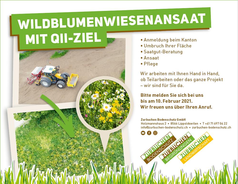Wildblumenwiesenansaat mit QII-Ziel im Kanton Thurgau
