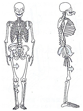 足のトラブルに関する「足病学」