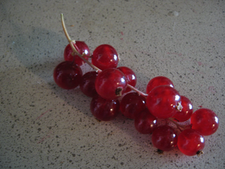 In a Red Currant Jam...