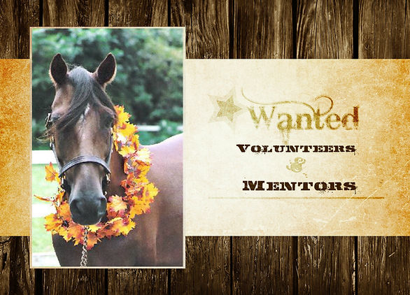 Volunteers and Mentors Wanted