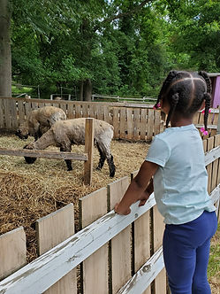 meeting sheep.jpg