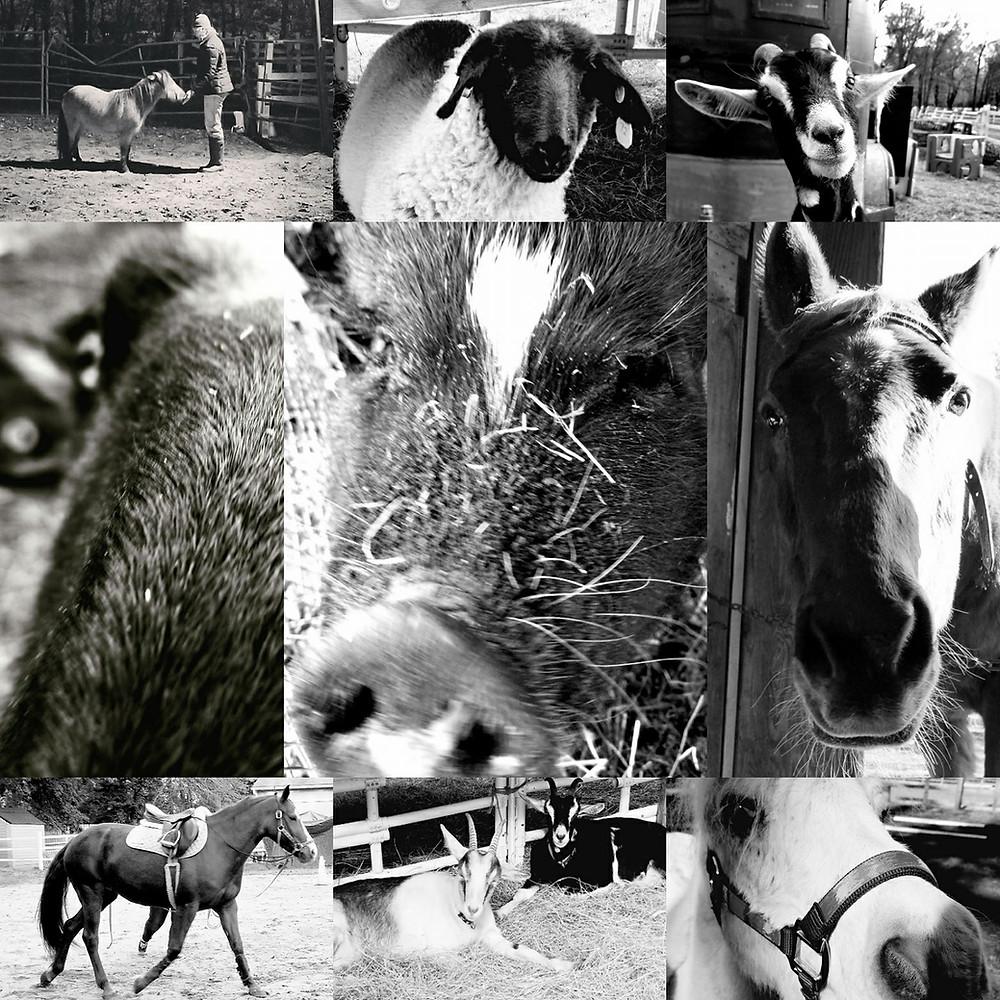 Members of our herd!