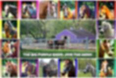 BPB Horse Residents