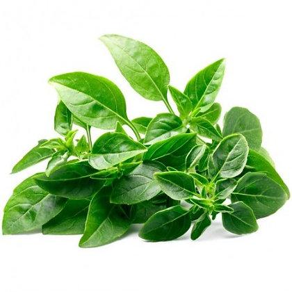 BASILIC Fin vert - pot Ø 10,5 cm