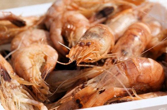 Crevettes Grises pêche Hollande