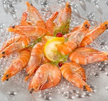 Crevettes Roses élevage Equateur Brésil