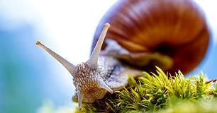 une-escargot-200000-morts-an.jpg