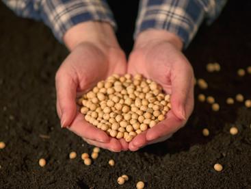 Por que padronizar os grãos?