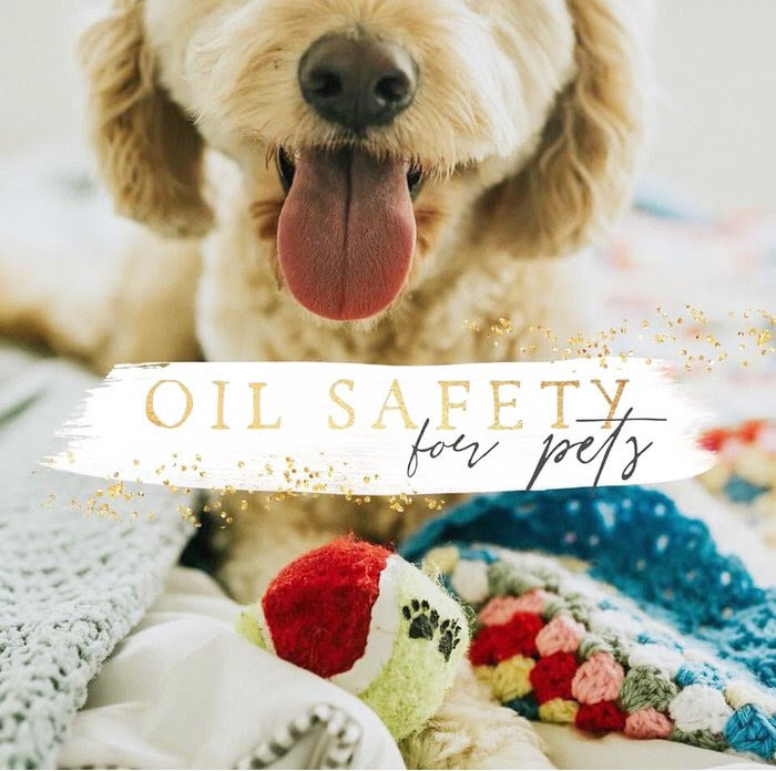 young living oils for pets, pets and oils, essential oil safety, seed to seal, pets, animals, diffusing, topically