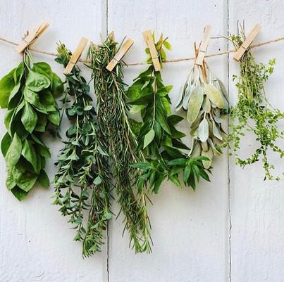 Oregano, the herb