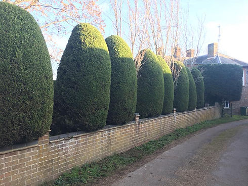 Shape Hedge.jpg