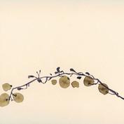 Ann Loubert, grape, 15x24cm .jpg