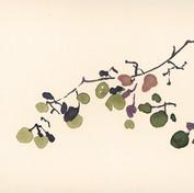 Raisins, aquarelle,15 * 24 cm