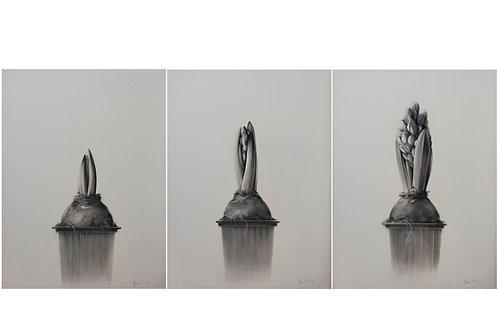 Triptyques 3 jacinthes - Pierre Colin