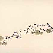 Raisins, aquarelle, 15 * 24cm