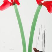 Amaryllis, aquarelle & crayon 29 * 39cm
