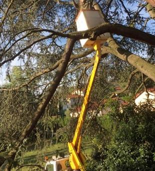 Faites Tailler vos haies et arbres par un pro !