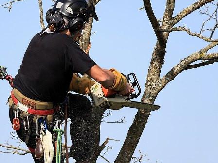 L'Hiver: Période Idéale pour faire Tailler vos arbres