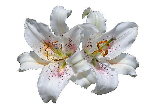 Lillieswebsite.jpg