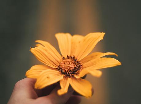 roža v roki.png