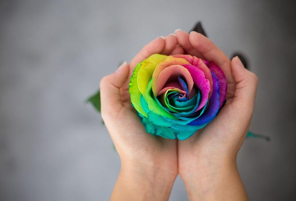 mani-con-una-rosa-arcobaleno.jpg