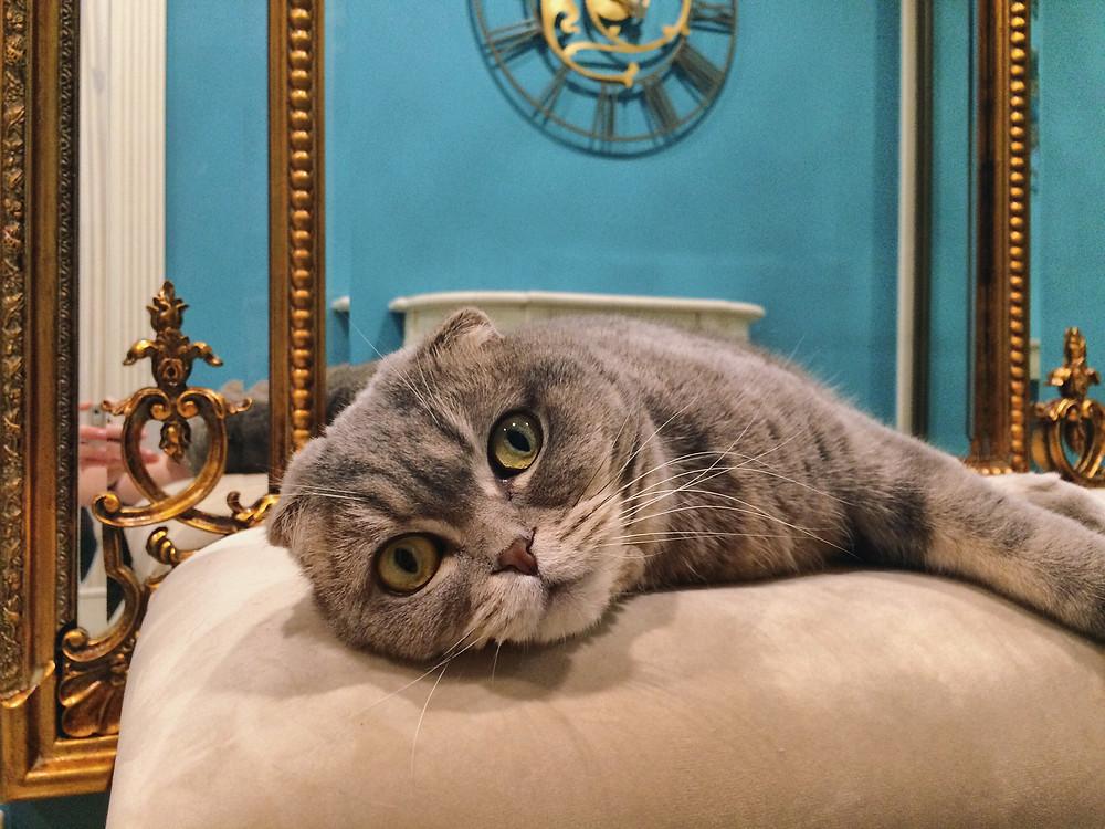 кошка в интерьере