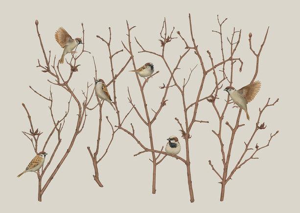 sparrows-on-twig-final-xs.jpg